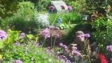 Aangeplante tuin